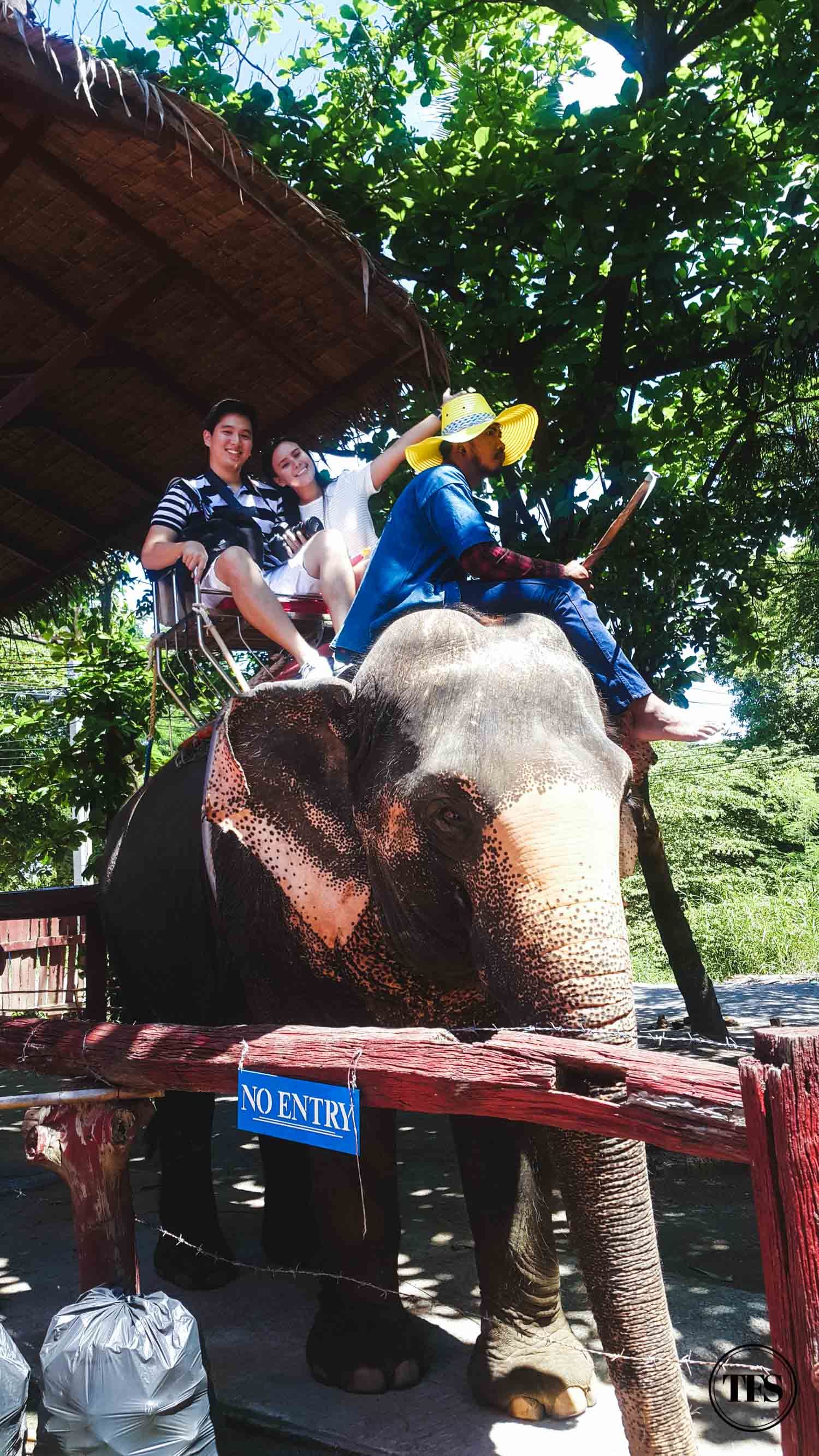 elephant village thailand